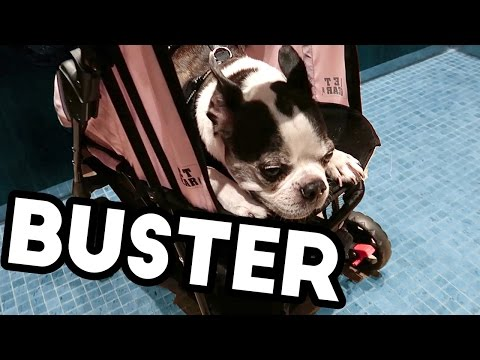 MY DOG IS SICK | Curtis Lepore Vlogs
