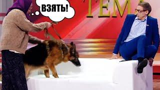 Спустила собаку в прямом эфире! Лживый депутат обманул пенсионерку а она спустила на него собаку!