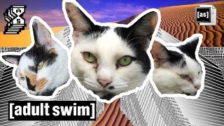 WOAH: Cats React to Adult Swim Shows