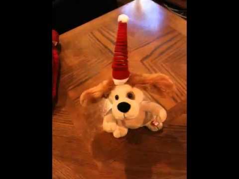 Christmas Dancing Dog - You Make Me Want To Shout - Merry Christmas - YouTube