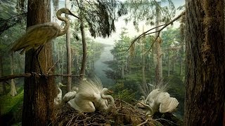 Birding at the Museum: Frank Chapman and the Dioramas