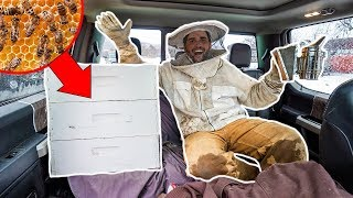 Transporting 10,000 HONEY BEES to My BACKYARD FARM!!! (Bad Idea)