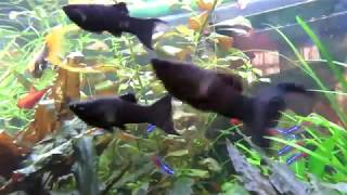 Население моего аквариума. Сколько рыб держать в одном аквариуме?