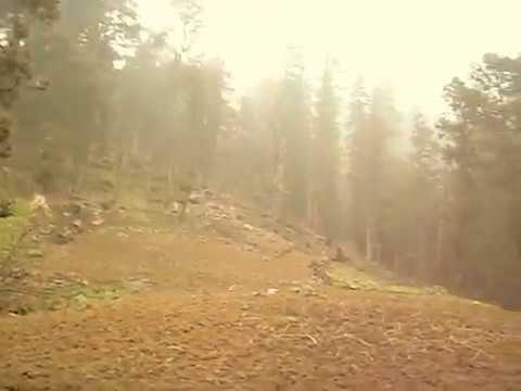 Deadly forest at 9000ft,Dadru(Himachal Pradesh)