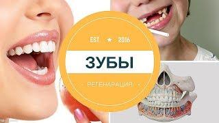 Что нужно для того чтобы вырастить зубы