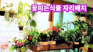 공기정화식물 거실에서도 잘자라는 식물소개 겨울관리 관엽…