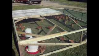 Custom Built Chicken Tractor
