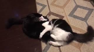 Funny cats vs dog