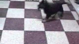 Puppy Training Kiki Lev Praee At The Age Of 7 Weeks