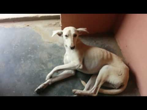 India Awesome Funny Dog Videos