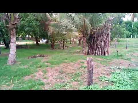 FOR SALE 4,000 SQM TITLED PROPERTY IN SAN VICENTE, PALAWAN