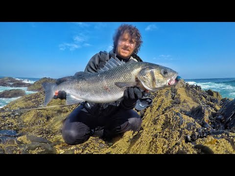 Testing Sea Bass Lures On Big Sea Bass - Great Results!! 2020 Part 2