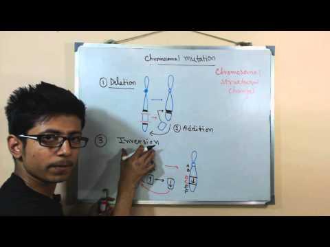 Chromosomal mutations | deletion mutation
