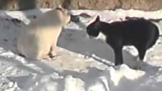 Коты пофигист и борзый