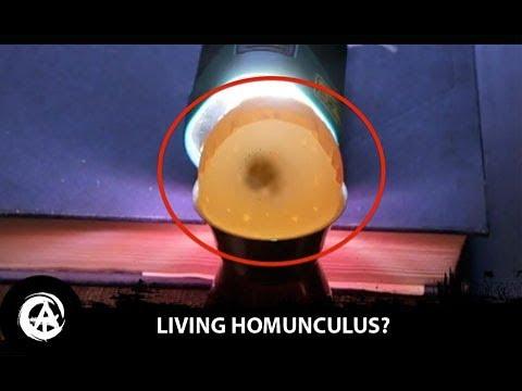 NEW Homunculus Shown Alive Inside the Egg?