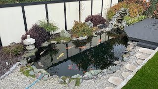 Beautiful Japanese Style Koi Pond In The UK!