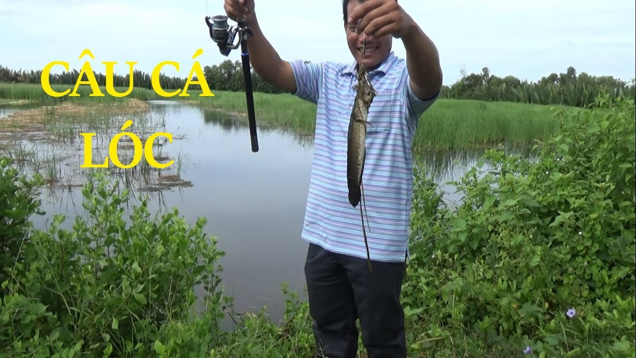 CÁCH CÂU CÁ LÓC, RÊ (LURE) CÁ LÓC ĐỒNG BY POU PHUNG FISHING