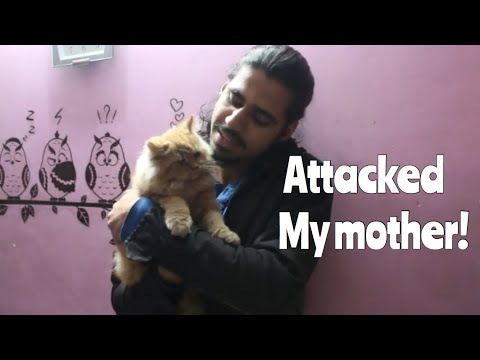 Why I Hated CATS before Simba | my True Story | Wildly Indian