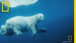 Underwater Polar Bear | National Geographic