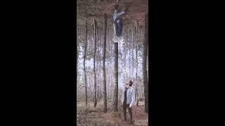 Lost in Trees (Vertical short film) - Vertical Stories