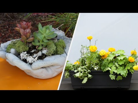 Easy And Unique Ways To Grow A Plant