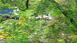 Comune Frascati Argomenti: Vermicino Ruspa in azione 002.avi