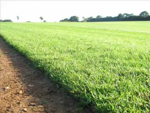 Fresh Turf Suppliers, TURF FARM PRODUCTION In The UK
