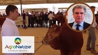 #AGRIUMBRIA 2019. La sfida della competitività dell'allevamento di bovini da carne
