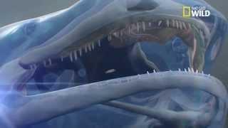 La salamandre géante