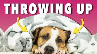 Help! My Dog is Throwing Up Yellow Foam | Ultimate Pet Nutrition - Dog Health Tips