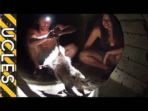 MYSTERIOUS creature caught in Mexico sewer - The Opossum