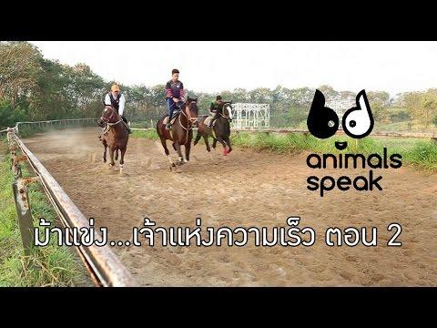 Animals Speak [by Mahidol] ม้าแข่ง...เจ้าแห่งความเร็ว ตอนที่ 2