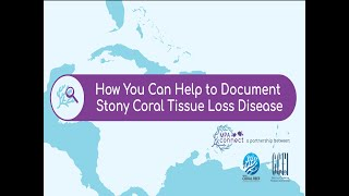 How to Document Stony Coral Tissue Loss Disease