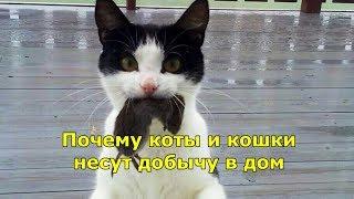 Почему коты и кошки несут добычу в дом.