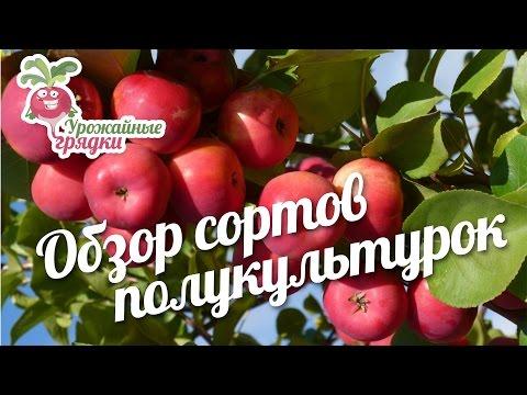 Обзор сортов полукультурок на примере урожая #urozhainye_gryadki