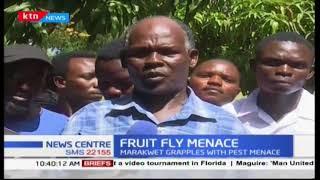 Marakwet grapples with pest menace