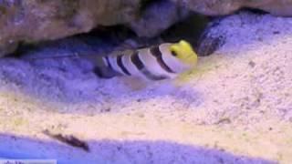 видео Интернет магазин аквариумистики «Lysmata