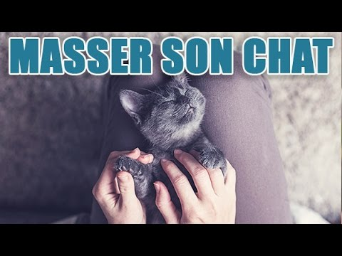 Comment masser le ventre de son chat ?