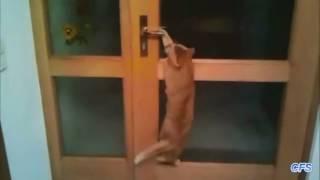 Коты открывают двери. Подборка