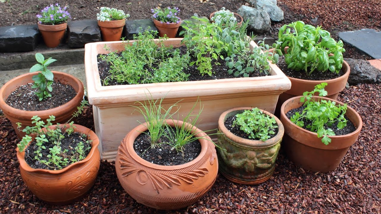 How to plant a culinary herb garden diy kitchen garden for Kitchen herb garden