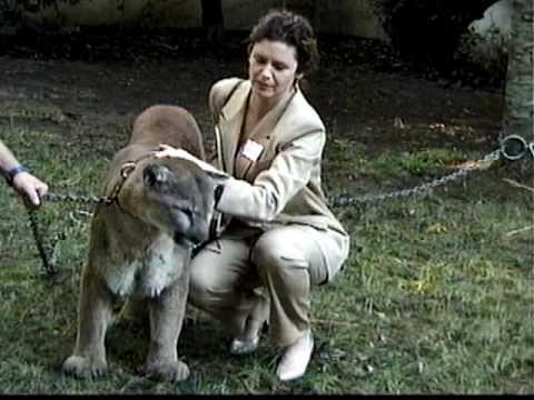 Cougar & Stephanie Zimbalist