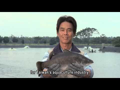 Taiwan's farmed sea bass In English 20 minute