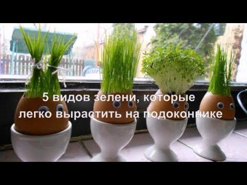 5 видов зелени, которые легко вырастить на подоконнике.