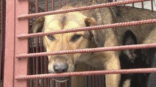 Сюжет ТСН24: В Туле изменились правила отлова бродячих животных