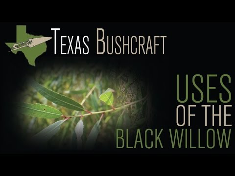 Texas Bushcraft: Uses of the Black Willow