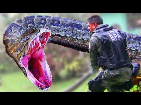 Epic Anaconda Battles Soldiers