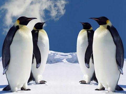 Пингвины мадагаскара мультфильм википедия