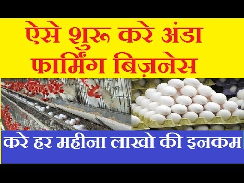 Start egg production business in india,  Layer Poultry Farm smart Business idea in hindi |