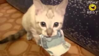 Самые смешные кошки 2016 #12