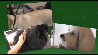 Groomingdales Pet Salon & Day Spa, Beavercreek Oh